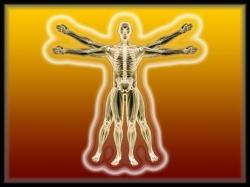 d-and-fyxt-body-trait