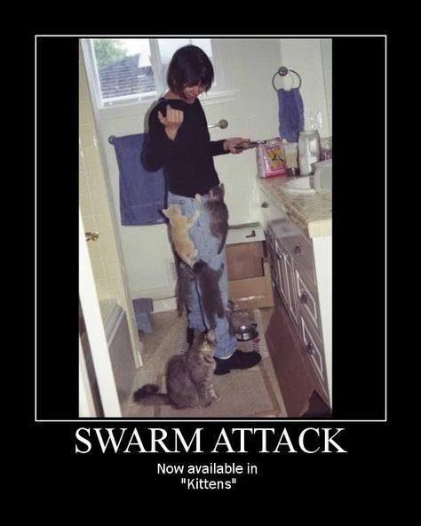 fyxt-rpg-motivational-poster-cat-swarm