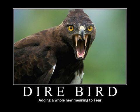 fyxt-rpg-motivational-poster-dire-bird