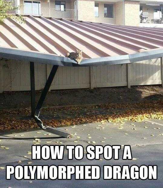 fyxt-rpg-meme-polymorph-dragon.jpg?f4148