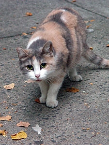 Image of Stray Cat
