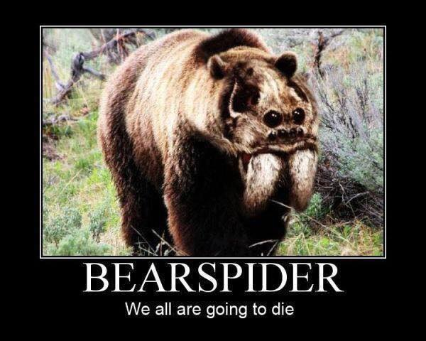 Image of Bearspider